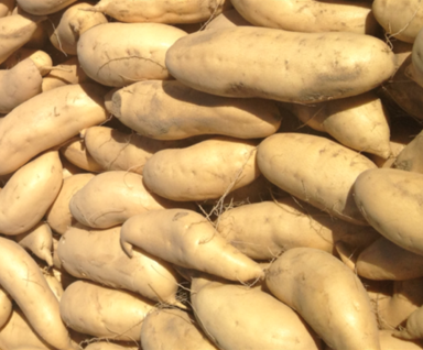 White whole sweet potatoes
